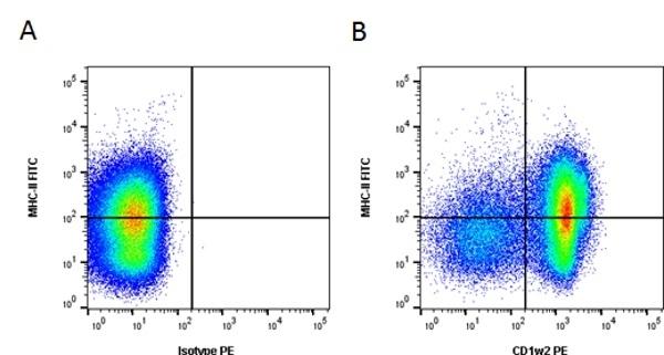 CD1w2 Antibody | CC20 gallery image 4