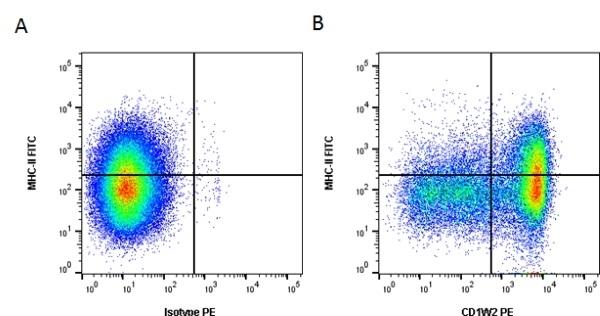 CD1w2 Antibody | CC20 gallery image 1