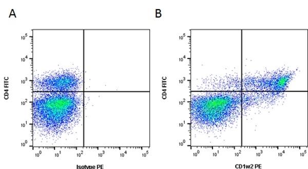 CD1w2 Antibody | CC20 gallery image 3