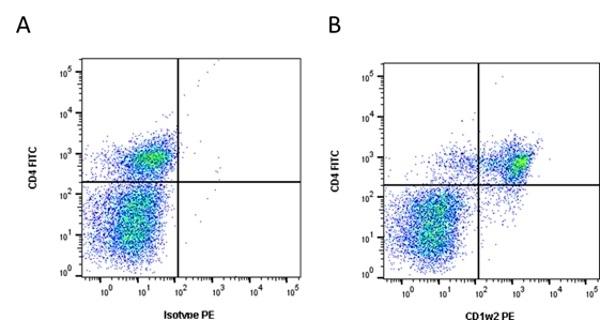 CD1w2 Antibody | CC20 gallery image 2