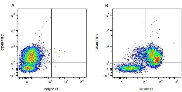 CD1w3 Antibody | CC43 gallery image 2