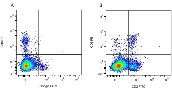 CD2 Antibody | CC42 gallery image 6