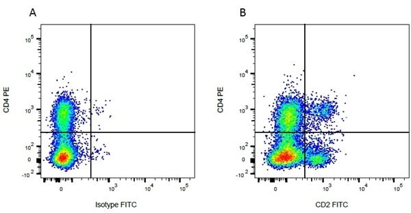 CD2 Antibody | CC42 gallery image 4