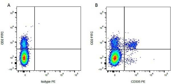 CD2 Antibody | CC42 gallery image 8