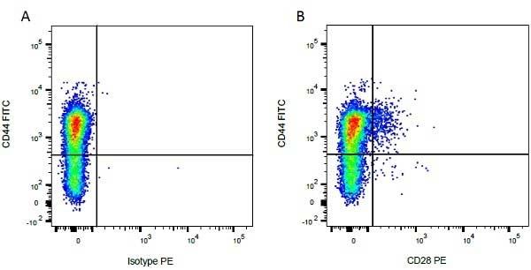 CD28 Antibody | CC219 gallery image 4