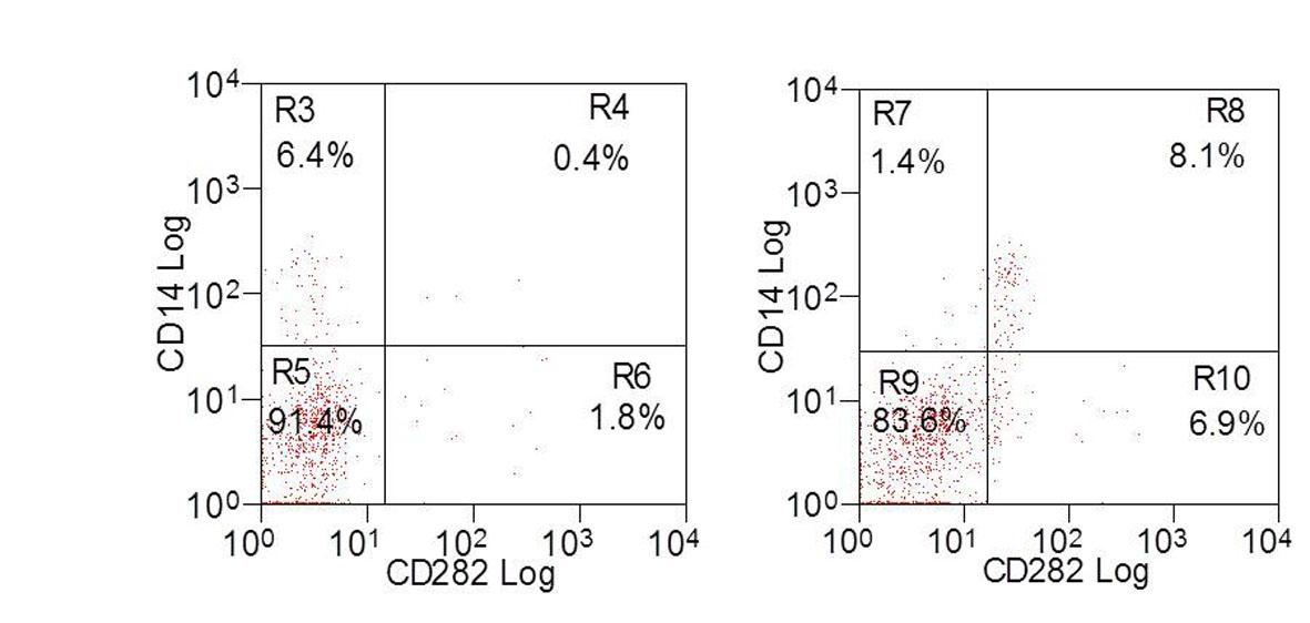 CD282 Antibody | AbD12538 gallery image 1