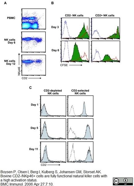 CD335 Antibody | AKS1 gallery image 2