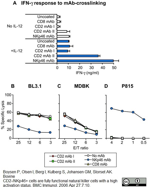 CD335 Antibody | AKS1 gallery image 3