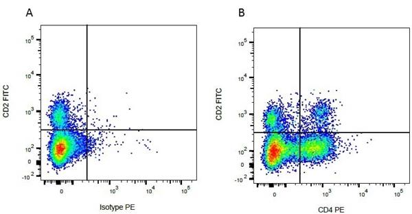 CD4 Antibody | CC8 gallery image 6
