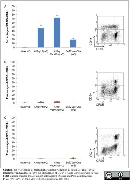 CD4 Antibody | CC8 gallery image 2