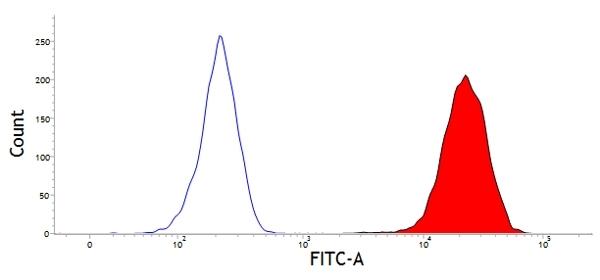 CD45 Antibody | CC1 gallery image 1