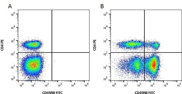 CD45RB Antibody   CC76 gallery image 1