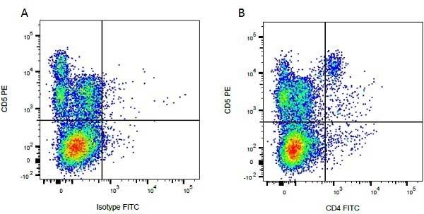 CD5 Antibody | CC17 gallery image 3