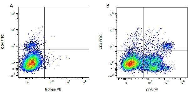 CD5 Antibody | CC17 gallery image 4