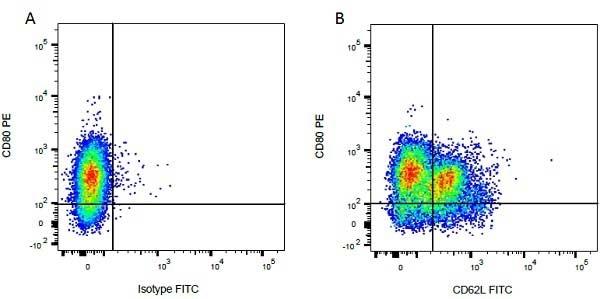 CD62L Antibody | CC32 gallery image 3