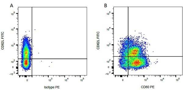 CD62L Antibody | CC32 gallery image 2