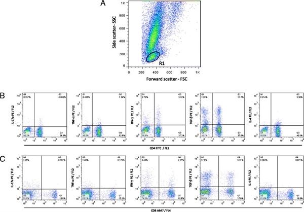 IFN Gamma Antibody | CC302 gallery image 8