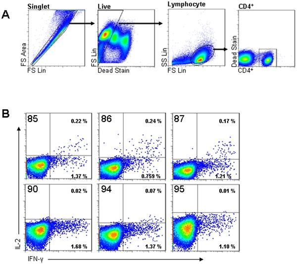 IFN Gamma Antibody | CC302 gallery image 7