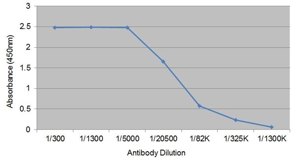 IgG1 Antibody | IL-A60 gallery image 1
