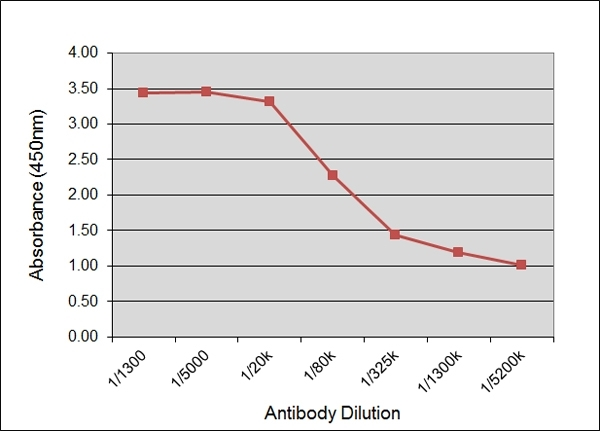 IgG2 Antibody | IL-A73 gallery image 1