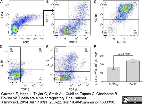MHC Class II DR Antibody | CC108 gallery image 5