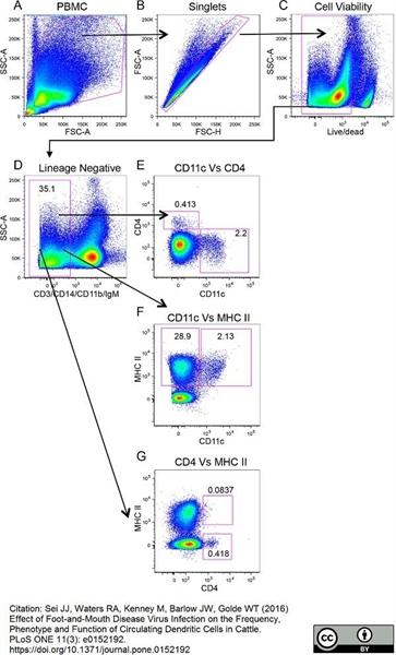 MHC Class II Monomorphic Antibody | IL-A21 gallery image 3