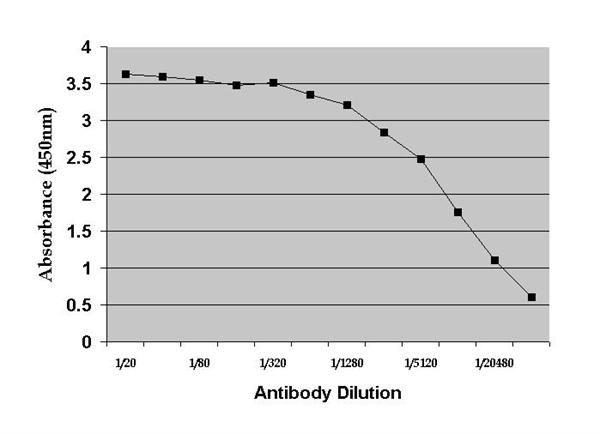 Dehydroepiandrosterone Antibody | DHEA(-3):1-19.1 (BGN/117/1191) gallery image 1