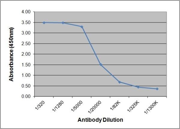 Estriol Antibody | 143.9A12 gallery image 1