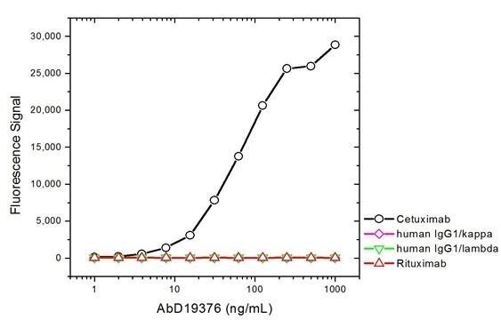 Cetuximab Antibody | AbD19376_hIgG1 gallery image 2