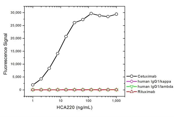 Cetuximab Antibody | AbD19834_hIgG1 gallery image 2