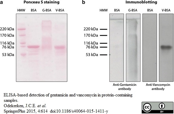 Vancomycin Antibody gallery image 1