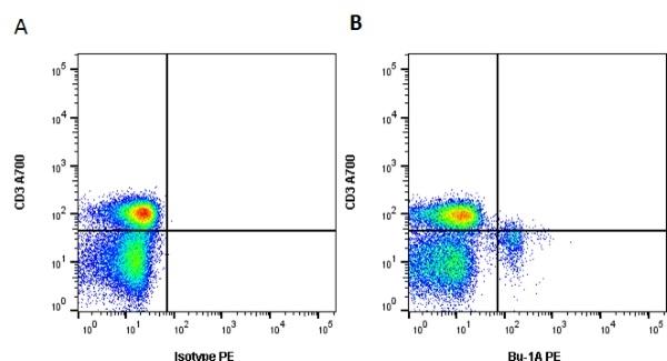 Bu-1A Antibody   L22 gallery image 2