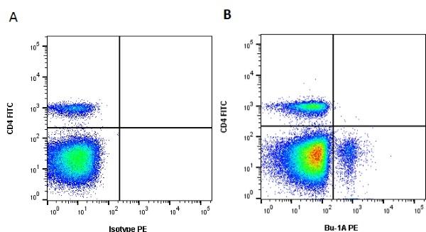 Bu-1A Antibody   L22 gallery image 1