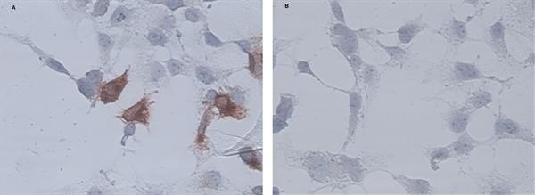 CD34 Antibody | AV138 gallery image 2