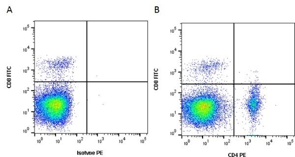 CD4 Antibody | 2-35 gallery image 3