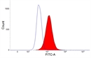 CSF1R Antibody | ROS-AV170 thumbnail image 5