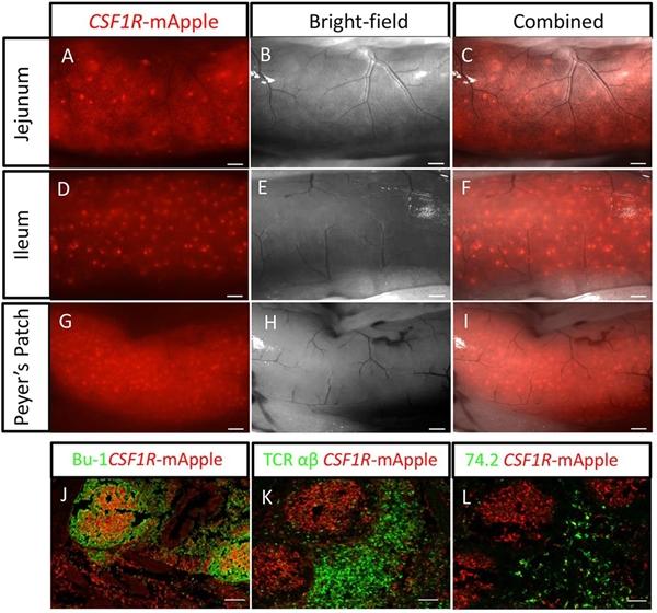TCR Alpha/Beta Antibody   TCR-2 gallery image 1