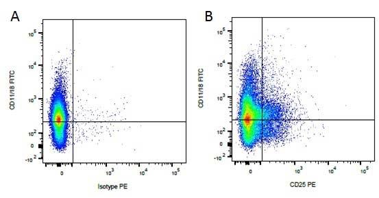 CD11/CD18 Antibody | YKIX490.6.4 gallery image 1