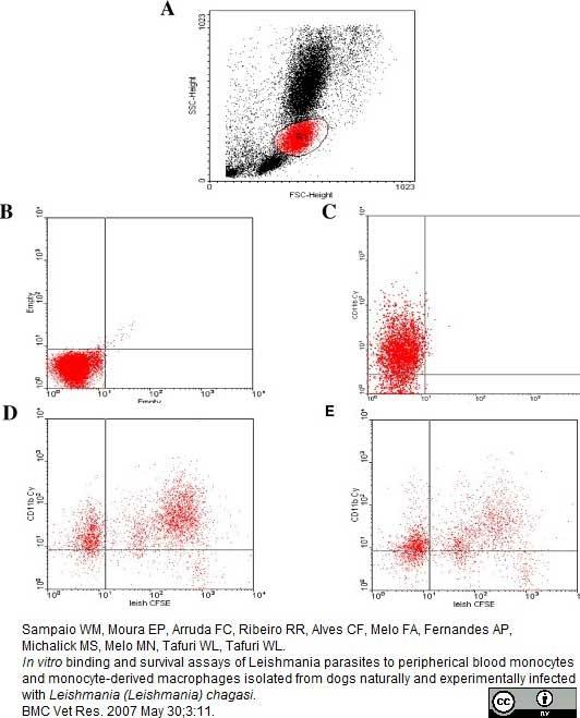 CD11b Antibody | CA16.3E10 gallery image 4