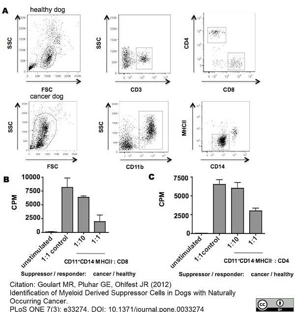 CD11b Antibody | CA16.3E10 gallery image 1