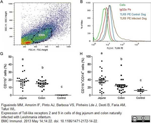 CD11b Antibody | CA16.3E10 gallery image 11