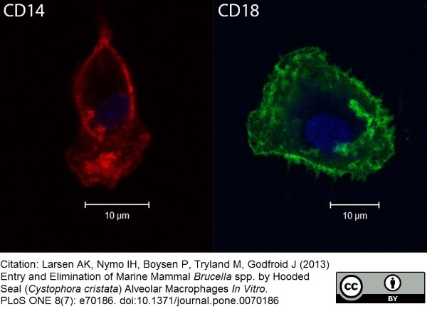 CD18 Antibody | CA1.4E9 gallery image 3