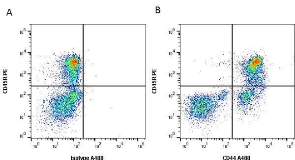 CD44 Antibody | YKIX337.8.7 gallery image 1