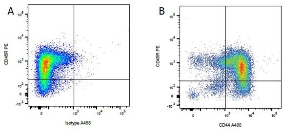 CD45R Antibody   YKIX753.22.2 gallery image 3