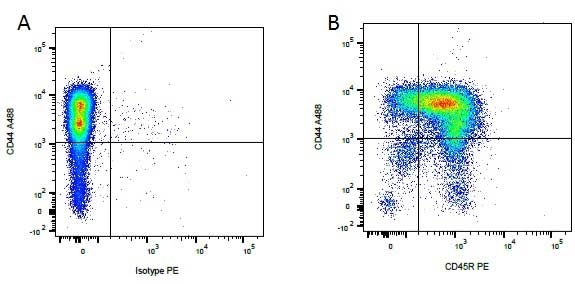 CD45R Antibody | YKIX753.22.2 gallery image 4
