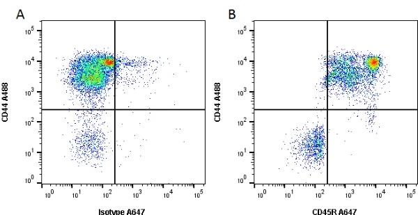 CD45R Antibody   YKIX753.22.2 gallery image 1