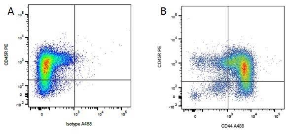 CD45R Antibody | YKIX753.22.2 gallery image 5