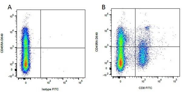 CD45RA Antibody | CA4.1D3 gallery image 2