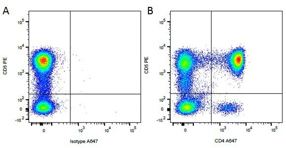 CD5 Antibody   YKIX322.3 gallery image 3