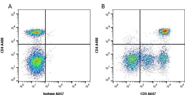 CD5 Antibody   YKIX322.3 gallery image 1